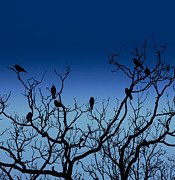 Crow Image Photos - Flock Of Birds by Peter Chadwick LRPS