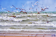 Wet Fly Prints - Flock of Gulls Flying over Waves Print by Purcell Pictures