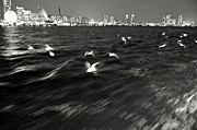 Night Scenes Photos - Flock of Seagulls Abstract by Dean Harte