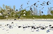 Flying Seagulls Framed Prints - Flock of seagulls Framed Print by David Lee Thompson