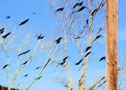 Flocks Photo Posters - Flocking Crows Poster by Viktor Savchenko