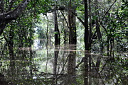 Wetland Metal Prints - Flooded Amazon Rainforest Metal Print by Oliver J Davis Photography