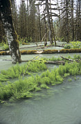 Squamish Framed Prints - Flooded Forest Framed Print by Alan Sirulnikoff