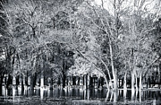 Flooded Prints - Flooded Park Print by John Rizzuto