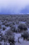 Flood Art Photo Prints - Flooded Sagebrush Print by Greg Vaughn - Printscapes