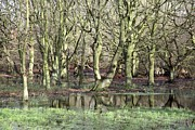 Flooding Photos - Flooded Trees by Victor De Schwanberg