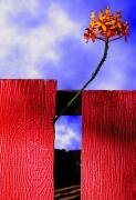 Fine Photography Art Framed Prints - Flora and The Red Fence Framed Print by Paul Wear