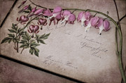 Bleeding Hearts Art - Floral Album Friends 1883-1885 by Robin-lee Vieira