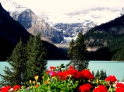 Lake Louise Photos - Floral and Ice by Karen Wiles
