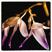 Floral Blend Print by David Patterson