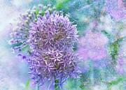 Floral Burst Print by Elaine Manley
