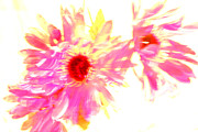 Iphoneonly Art - Floral Burst by Mickey Hatt