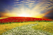 Fantasy Tree Posters - Floral Field On Sunset Poster by Setsiri Silapasuwanchai