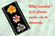Filmstrip Posters - Floral Filmstrip Poster by Bill Barber