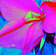 Stamen Digital Art - Floral IV by Torri Bates