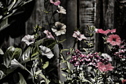 Photo Mixed Media - Floral Melody by Bonnie Bruno