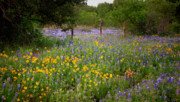 Texas Wild Flowers Prints - Floral Pasture No. 2 Print by Jon Holiday