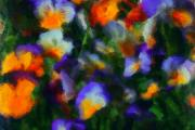 Photo Manipulation Digital Art Framed Prints - Floral Study 053010A Framed Print by David Lane