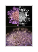Nature Study Metal Prints - Floralicious  Metal Print by Bonnie Bruno