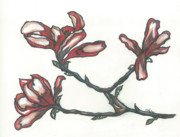 Iowa Pastels Prints - Florences Magnolias Print by Shelby Kube