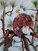 Bald Eagle Painting Framed Prints - Florida Bald Eagle Framed Print by Maria Barry