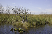 Miami River Photos - Florida Everglades 10 by Madeline Ellis