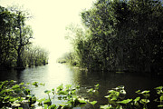 Miami River Photos - Florida Everglades 7 by Madeline Ellis