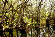 Miami River Photos - Florida Everglades 9 by Madeline Ellis