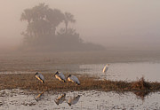 Bird Photography Photos - Florida Everglades Wood Storks by Juergen Roth