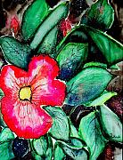 Florida Flowers Mixed Media Prints - Florida Flower Print by Margaret Fortunato