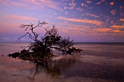 Florida Keys Framed Prints - Florida Mangrove Sunset Framed Print by Mike  Dawson