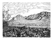 Pen And Ink Framed Prints Drawings - Florida Mountains and Poppies by Jack Pumphrey