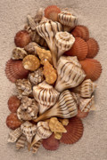 Shells Mixed Media - Florida Opus 09 by Carol Zee