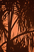 Frond Posters - Florida Palm Shadow Poster by Carolyn Marshall