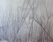 Panther Drawings - Florida Panther - Watching by PJ Jackson