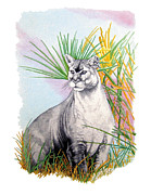 Panther Drawings - Florida Panther by Bruce Camburn