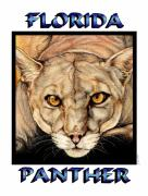 Florida Drawings Framed Prints - Florida Panther Framed Print by Sheryl Unwin