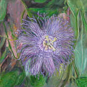 Passionflower Painting Prints - Florida Passion Flower Vine Print by Patty Weeks