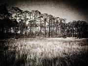 Signed Photo Prints - Florida Pine 2 Print by Skip Nall