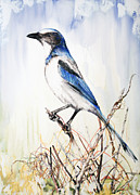 Threat Mixed Media Posters - Florida Scrub Jay Poster by Anthony Burks