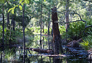 Florida Swamp Prints - Florida Swamp Print by Kenneth Albin