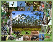 Naturalist Digital Art Posters - Florida Wildlife Photo Collage Poster by Barbara Bowen