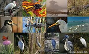 Bird Photography Posters - Florida Wildlife Photography Fine Art Collage Poster by Juergen Roth