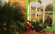 Florida Flowers Framed Prints - Florida Window Framed Print by Susanne Van Hulst