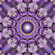 Lilac Prints - Flow Print by Bell And Todd