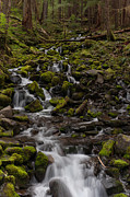 Olympic National Park Prints - Flow of Life Print by Mike Reid
