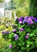 Purple Hydrangeas Prints - Flower - Hydrangea - Lovely Hydrangea  Print by Mike Savad