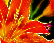 Orange Tiger Lily Prints - Flower - Lily 1 - Abstract Print by Paul Ward