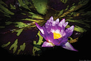 Watercolor! Art Photo Prints - Flower - Lotus - Nymphaea - Pleasant Day Print by Mike Savad