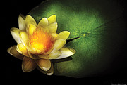 Glowing Photo Acrylic Prints - Flower - Lotus - Nymphaea  Chromatella - Yellow Lily Acrylic Print by Mike Savad